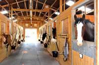 Освещение для лошадей