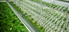 Як  нагодувати зростаюче населення планети?