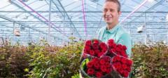 Виробники троянд збільшують використання світлодіодів